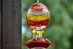 Fim do alimentador do pássaro do zumbido acima Foto de Stock