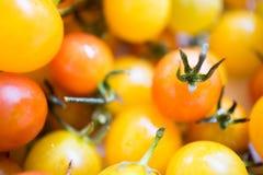 Fim do amarelo de tomates e da cor vermelha ascendente e macro Imagem de Stock