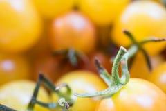 Fim do amarelo de tomates e da cor vermelha ascendente e macro Fotografia de Stock