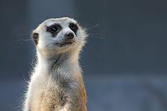 Fim do animal do jardim zoológico acima Foto de Stock Royalty Free