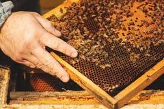 Fim do detalhe da colmeia da abelha acima Apicultor Inspecting Bee Hive após o inverno foto de stock