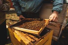 Fim do detalhe da colmeia da abelha acima Apicultor Inspecting Bee Hive ap?s o inverno imagens de stock
