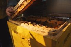 Fim do detalhe da colmeia da abelha acima Apicultor Inspecting Bee Hive ap?s o inverno foto de stock