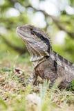 Fim do dragão de água da Páscoa acima foto de stock