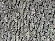 Fim do fundo da árvore de casca do carvalho acima do tiro do detalhe Fotografia de Stock Royalty Free