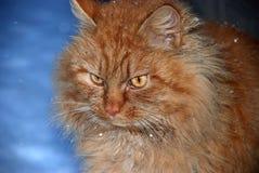 Fim do gato do gengibre acima na neve Imagens de Stock