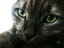 Fim do gato preto acima fotografia de stock royalty free