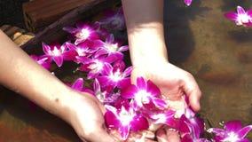 FIM do MOVIMENTO LENTO ACIMA da mão que toca em flores roxas na bacia da água video estoque