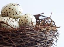 Fim do ninho do pássaro acima imagens de stock royalty free