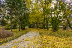 Fim do outono dourado Foto de Stock Royalty Free