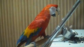 Fim do papagaio da arara da arara acima vídeos de arquivo