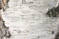 Fim do papel de fundo natural da textura da casca de vidoeiro Imagens de Stock