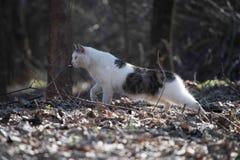 Fim do retrato do gato acima Fotografia de Stock Royalty Free