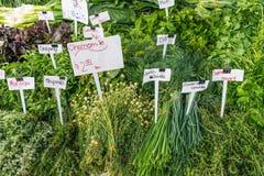 Fim do suporte da erva acima no mercado do ` s do fazendeiro imagem de stock royalty free