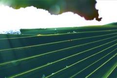 Fim em folha de palmeira acima com raios claros e neve no fundo imagens de stock