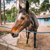 Fim engraçado do cavalo de Brown acima da cabeça Fotos de Stock