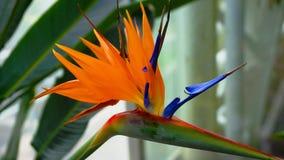 Fim exótico da flor acima fotos de stock