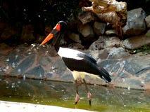 Fim exótico dos pássaros acima no parque Maspalomas de Palmitos, Gran Canaria, Espanha Fotografia de Stock