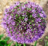 Fim floral da beleza acima Fotos de Stock Royalty Free