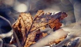 Fim fragmentário secado-acima velho da folha acima Foto de Stock
