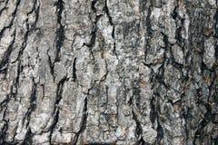 Fim gasto de madeira natural velho do fundo acima, fundo de madeira velho, textura do uso de madeira da casca como o fundo natura fotos de stock