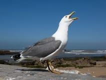 Fim grande da gaivota acima Fotografia de Stock