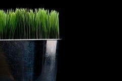 Fim horizontal acima da grama verde em um metal cont imagens de stock royalty free
