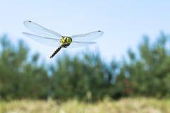 Fim macro da foto da libélula acima imagem de stock royalty free