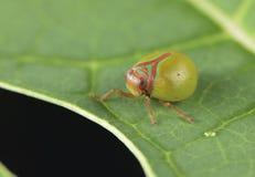 Fim macro do detalhe do joaninha do inseto acima do fundo do papel de parede imagens de stock