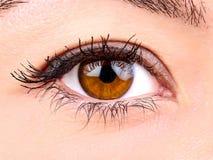 Fim marrom do olho da mulher acima Fotografia de Stock Royalty Free