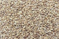 Fim natural do alimento biológico do trigo acima do fundo imagem de stock