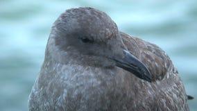 Fim novo da gaivota acima de San Francisco video estoque