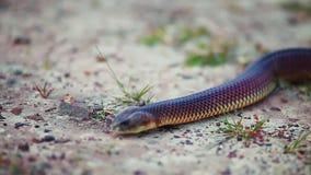 Fim obscuro acima da serpente que desliza à câmera