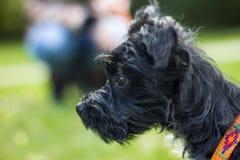 Fim pequeno do cachorrinho acima fotos de stock royalty free