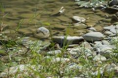 Fim pequeno do rio das pedras acima imagem de stock royalty free