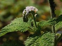 Fim roxo minúsculo bonito da flor selvagem acima fotografia de stock