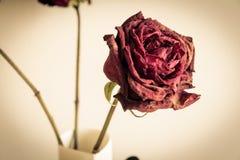 Fim seco da rosa acima Fotografia de Stock