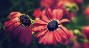 Fim sereno acima de flores vermelhas no jardim Fotos de Stock