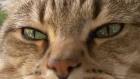 Fim sonolento do retrato do gato acima vídeos de arquivo