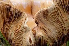 Fim torcido do cogumelo acima Fotografia de Stock Royalty Free