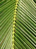 Fim tropical acima Imagem de Stock Royalty Free