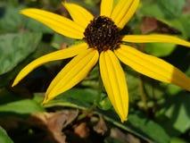 Fim-u amarelo da flor Imagem de Stock Royalty Free