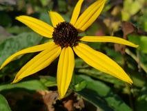 Fim-u amarelo da flor Foto de Stock Royalty Free