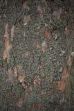 Fim velho da casca de árvore acima imagem de stock royalty free