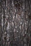 Fim velho da casca de árvore acima do fundo da textura fotografia de stock