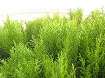 Fim verde da árvore acima Foto de Stock