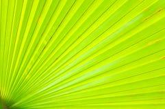 Fim verde da folha de palmeira acima Imagens de Stock Royalty Free
