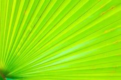 Fim verde da folha de palmeira acima Foto de Stock Royalty Free