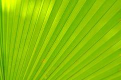 Fim verde da folha de palmeira acima Fotos de Stock Royalty Free