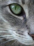 Fim verde do macro do olho de gato acima Fotos de Stock Royalty Free